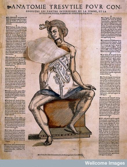 L0017547 Anatomical fugitive sheet; female. Images.