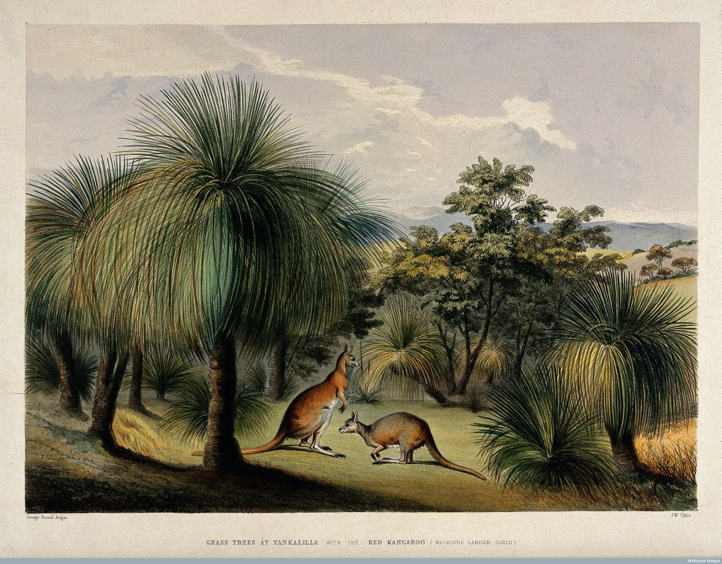 Australian Food in the 19th century
